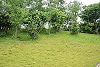 公园风景摄影图片