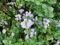 花圃小野花