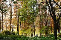 秋天的红叶风景图片