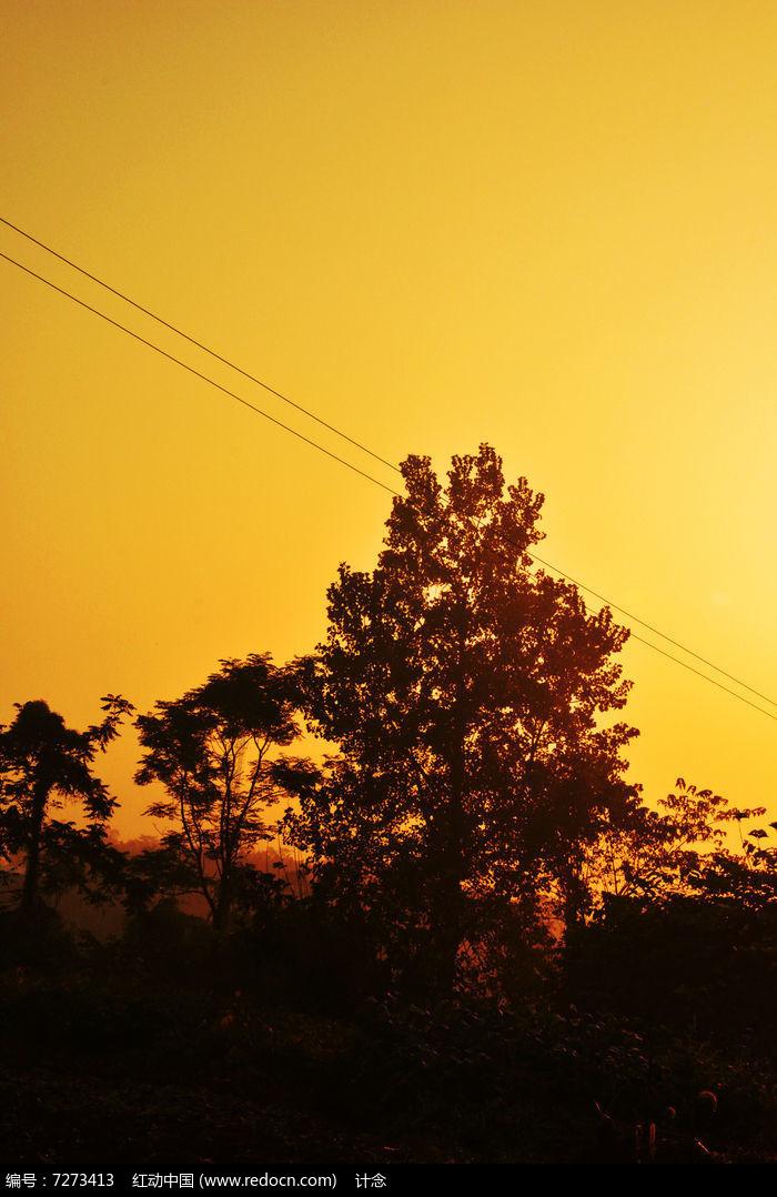 夕阳下的树