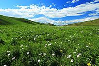 草原丰茂的植被