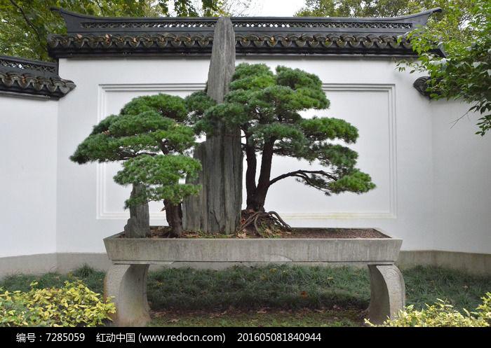 原创摄影图 动物植物 树木枝叶 黑松盆景  请您分享: 素材描述:红动网