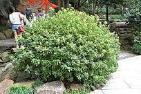 路边一株绿色植物素材