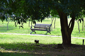 绿色大树下的木质座椅