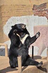 拍手的熊宝宝素材