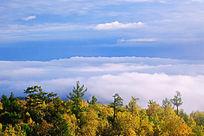秋林云海景观