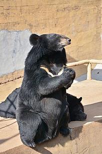 要吃东西的熊宝宝
