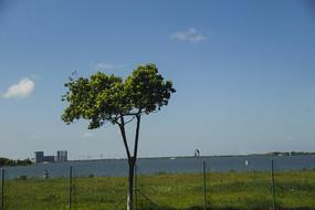 绿树滴水湖