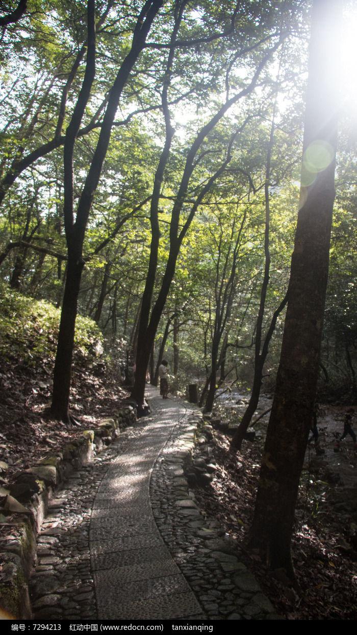 山间林阴小路图片,高清大图_森林树林素材