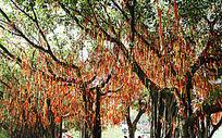 挂满许愿带的树