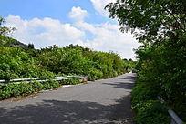 马路边的景色图
