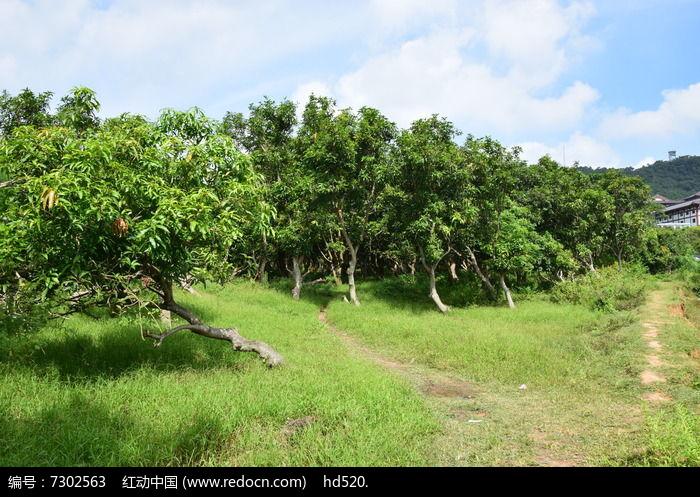 树林风景图片图片