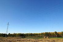 田地旁的杨树林场
