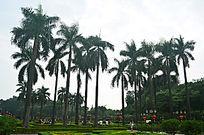 椰树树林风景图片