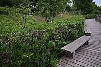 滨江公园的木长椅