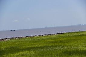 东海大桥滩涂湿地