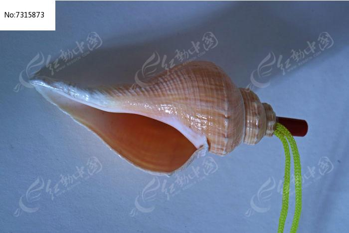 海螺壳饰品图片