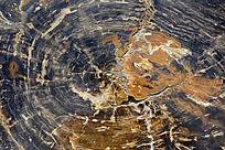 木化石截面
