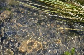 清澈的小溪