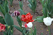 五颜六色的小花