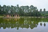 湖边的树木与倒影图片