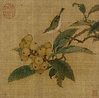 枇杷山鸟图