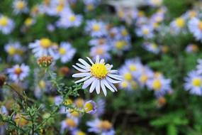 不知名的野花