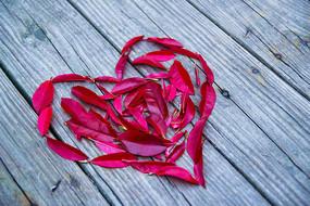 红色叶子心形图案素材