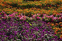 花卉世界背景素材