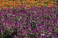花卉世界花海风景图片