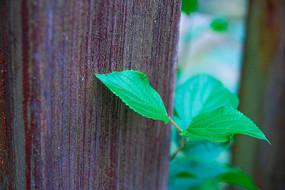 探出头的绿色叶子