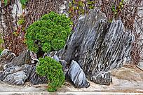 园艺景观石头黑松摆件造型艺术图片素材
