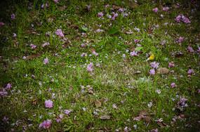 地上落满了花瓣