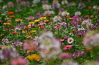 美丽的花草世界风景图片