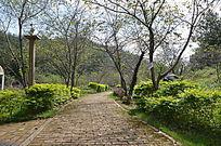 樱花林荫小道