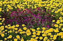 紫色小花与菊花花圃