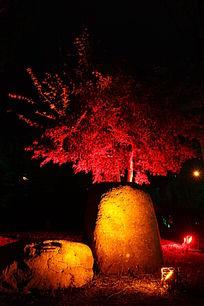 夜色下的红枫树