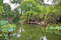 园林景观荷花荷叶垂柳素材