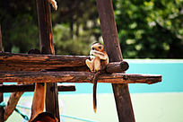 金丝猴幼崽