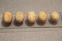 西晋晋墓所出土红皮鸡蛋壳