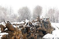 风雪中的枯木