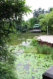 广州天河公园粤晖园
