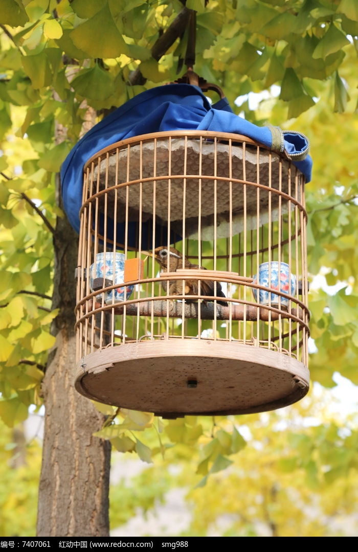 原创摄影图 动物植物 空中动物 笼子里的小鸟  请您分享: 红动网提供
