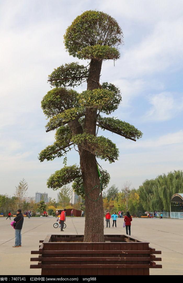 原创摄影图 动物植物 树木枝叶 公园盆景  请您分享: 红动网提供树木