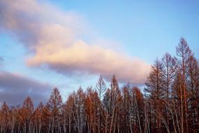 晚秋树林彩云