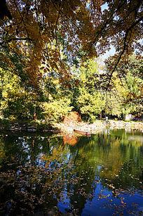 颐和园湖面的秋色