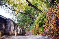 颐和园秋色
