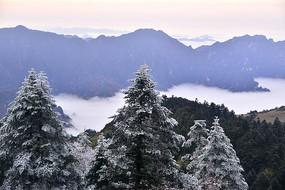 神农架林珊上的雪霜