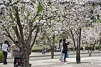 海棠花赏花游人