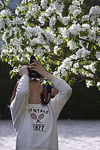 海棠花下拍照